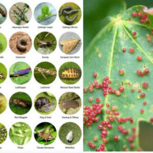 Pests & Diseases